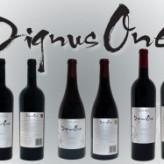 Promoción de Polos Opuestos Wines